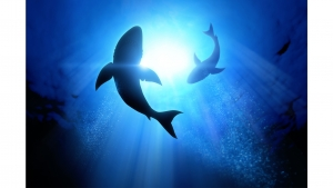 Marketing News: Shark Week